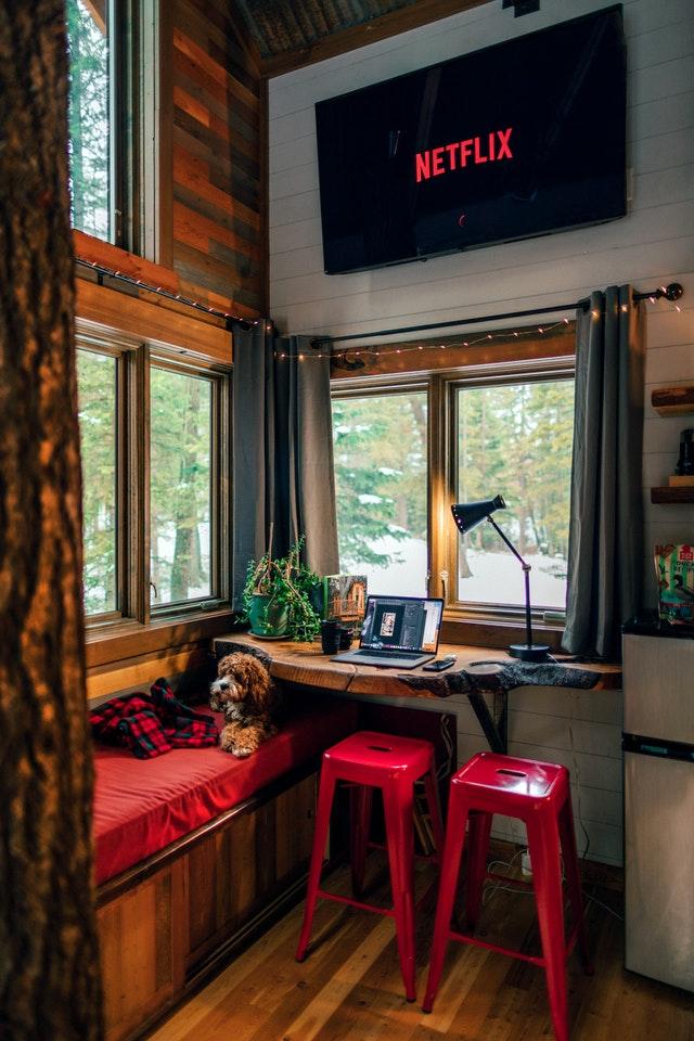 pexels roberto nickson 2659629 - Cuidados com cães e gatos em casa