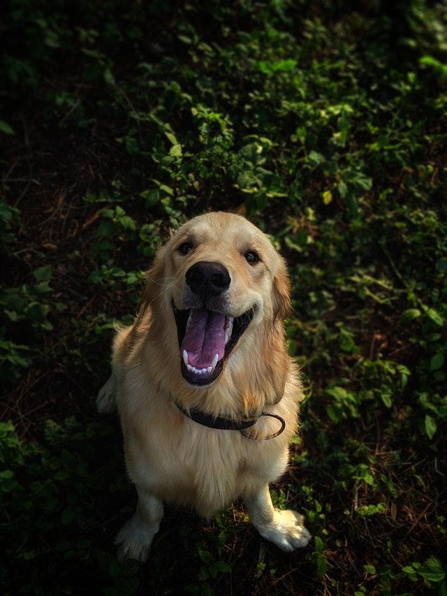 pexels mithul varshan 2409503 - A troca de dentes em filhotes de Cães e Gatos