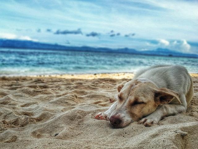 pexels ruel madelo 928447 - Intoxicação alcoólica em cães