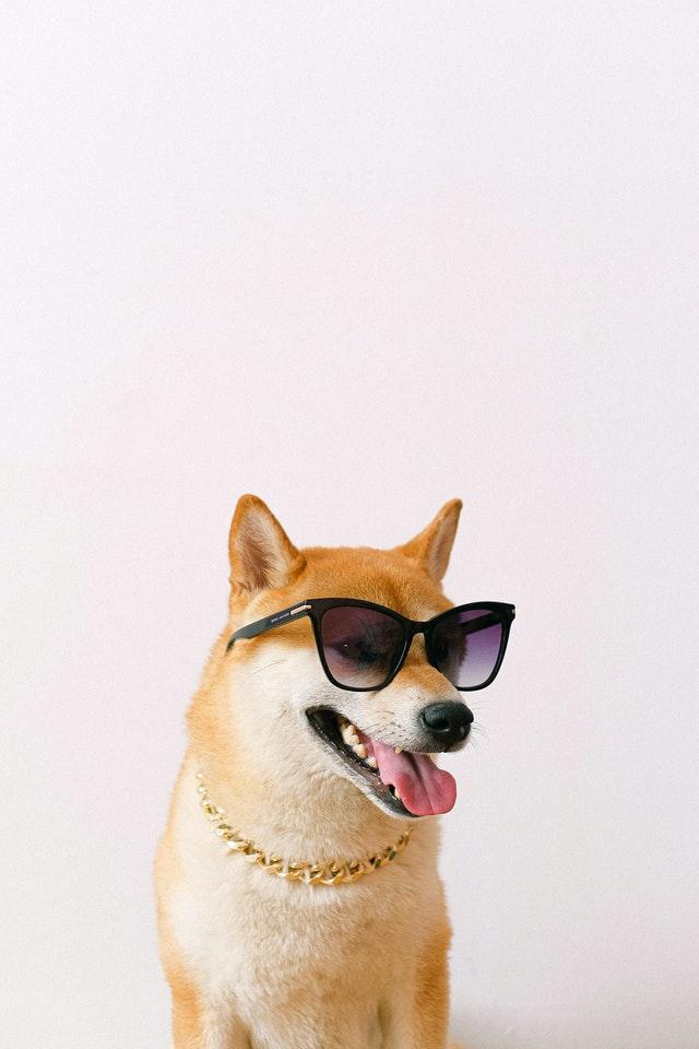 pexels anna shvets 4588001 - Temporada de verão exige cuidados especiais com os pets