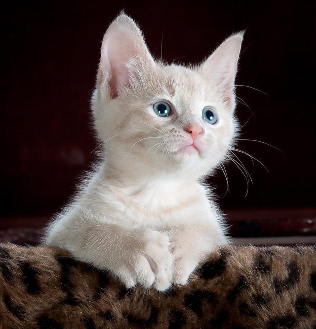 pexels pixabay 45201 1 - O gatinho não quer conversa