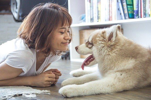 girl 1160441 640 - A troca de dentes em filhotes de cães e gatos