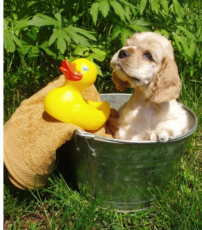pet store online puppy bath - Como e por quê dar Banho no seu Pet?