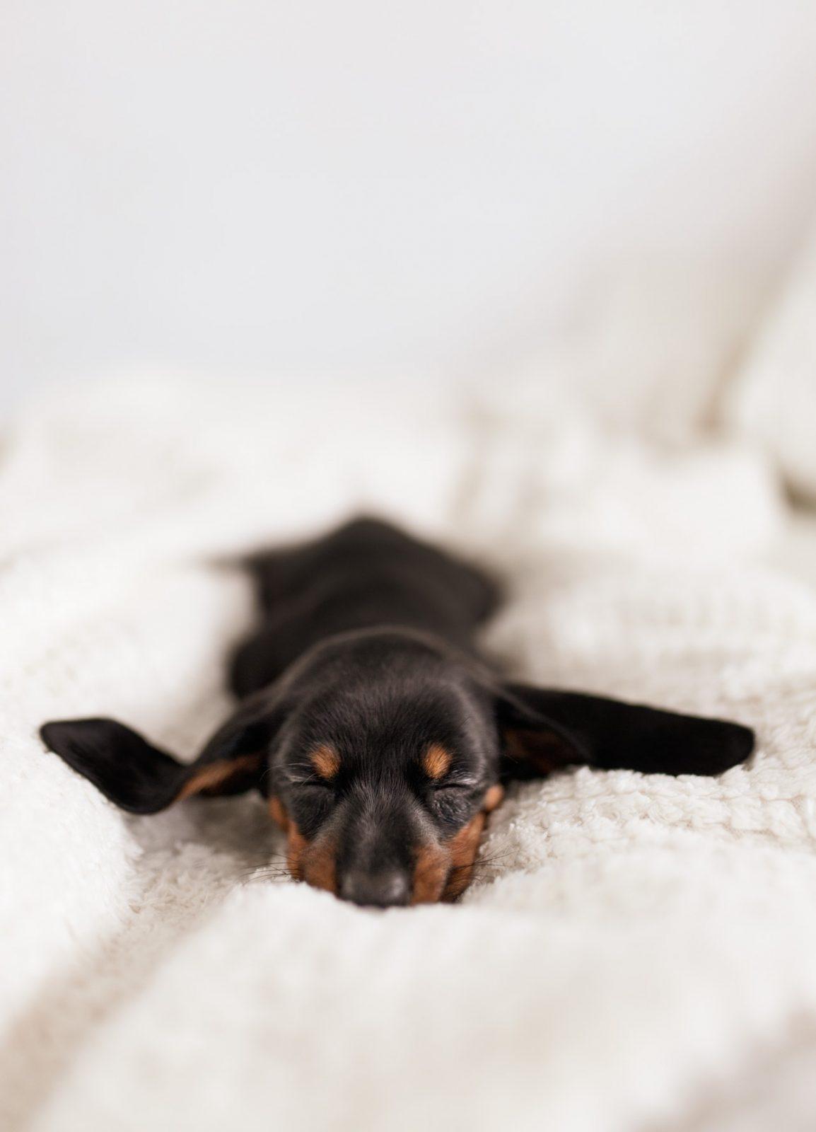 pexels dominika roseclay 4148015 - Diarréia crônica em filhotes de cães e gatos: Pode ser Giárdia?
