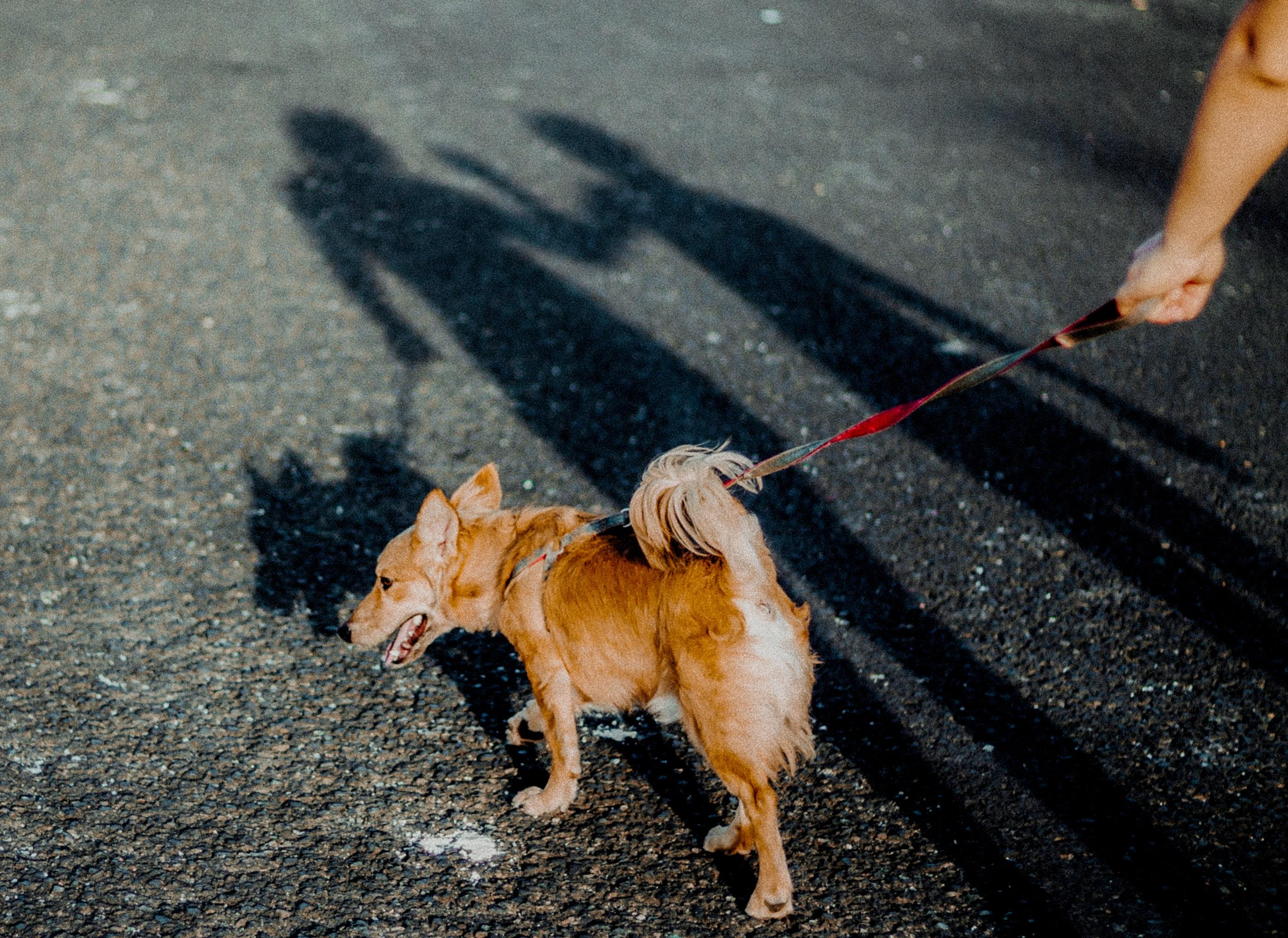 """pexels jose raul 4662225 - Coceira em Cães e Gatos: O """"Quanto"""" é Normal?"""
