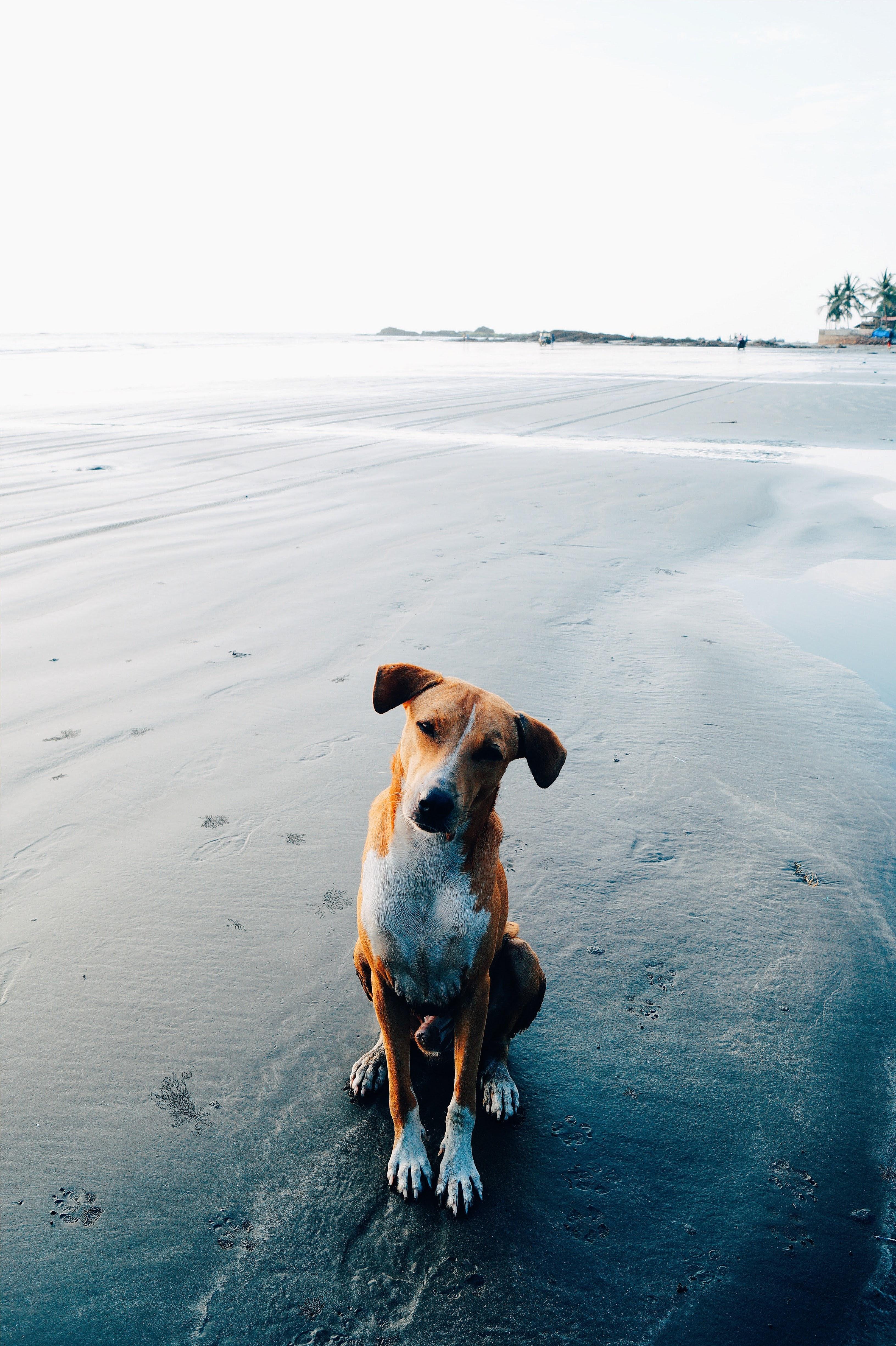 """pexels pranjal srivastava 2470612 - Por que o meu cão esfrega o """"bumbum"""" no chão, geralmente depois de defecar?"""