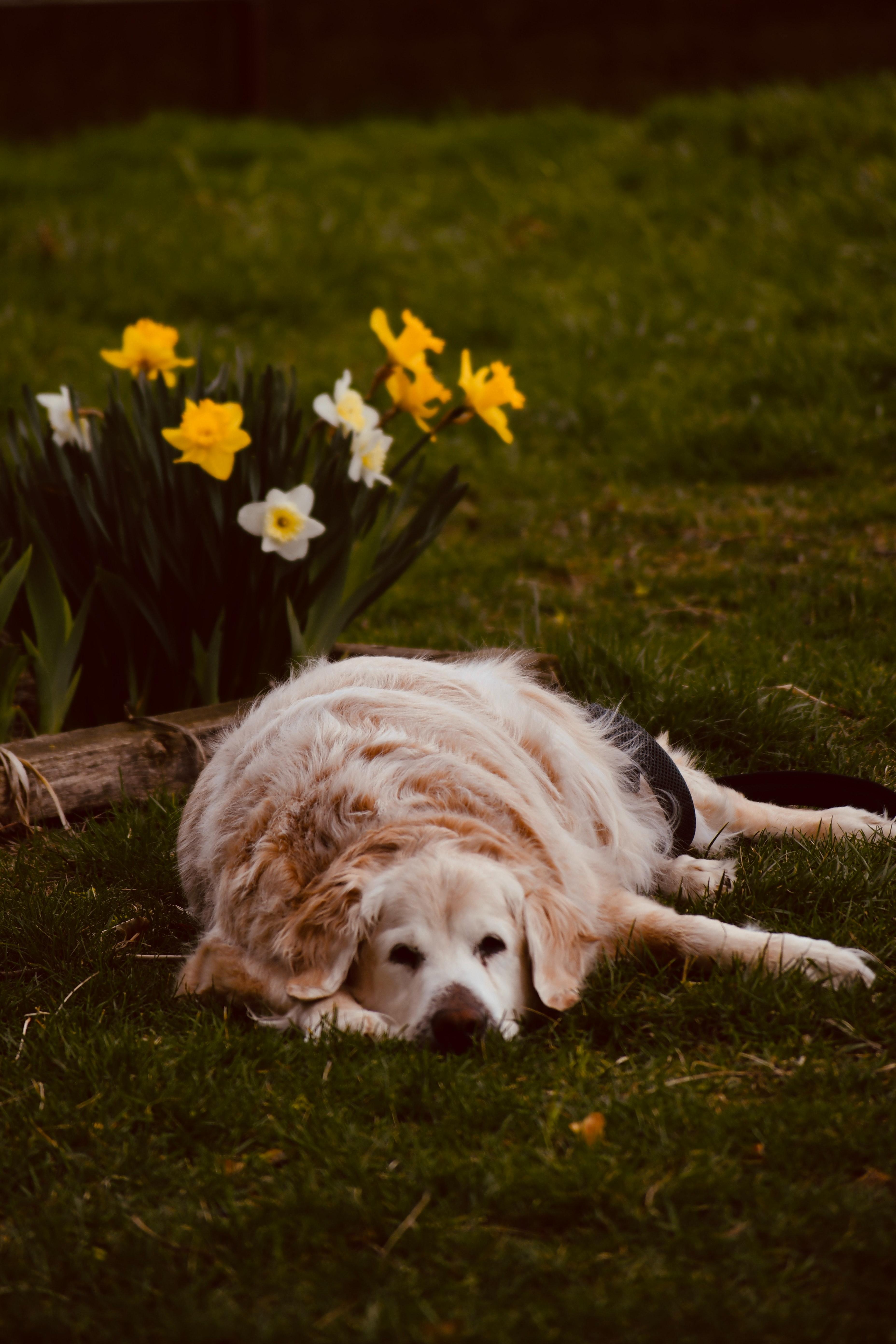 pexels ventill productions 7512239 - Problema de prostata em cães