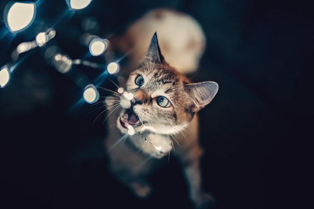 pexels helena lopes 1931368 - Fique alerta com cães e gatos na época das Festas!