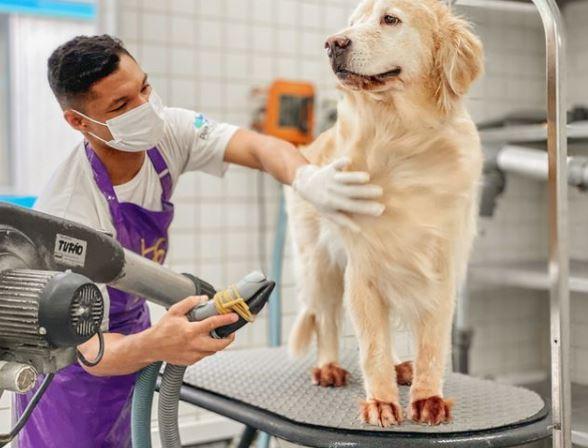 banho e tosa - Novidade no Pet Care !!! Banho e Tosa