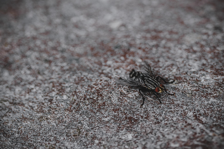pexels eberhard grossgasteiger 1290911 - Verão, Calor Moscas e Pernilongos...uma Combinação Irritante e Perigosa
