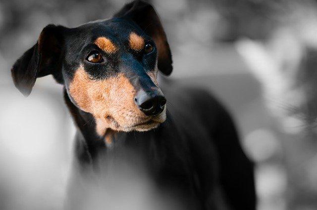 dog 1787835 640 - Diabetes Mellitus em Cães e Gatos: O que é isso?