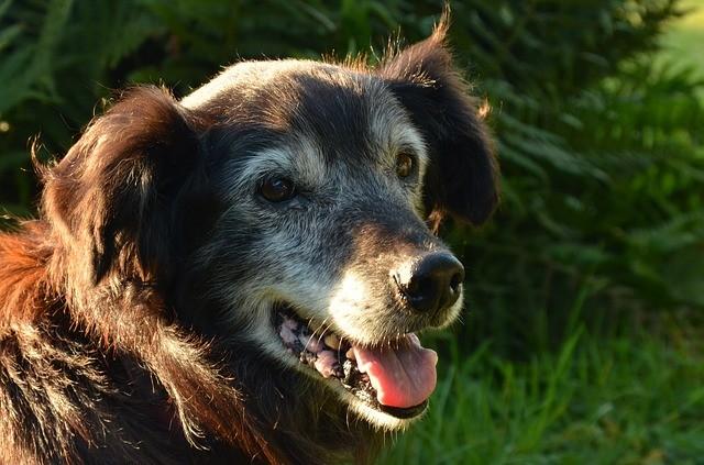 dog 1655150 640 - Problemas respiratórios em Cães e Gatos e Bordetella