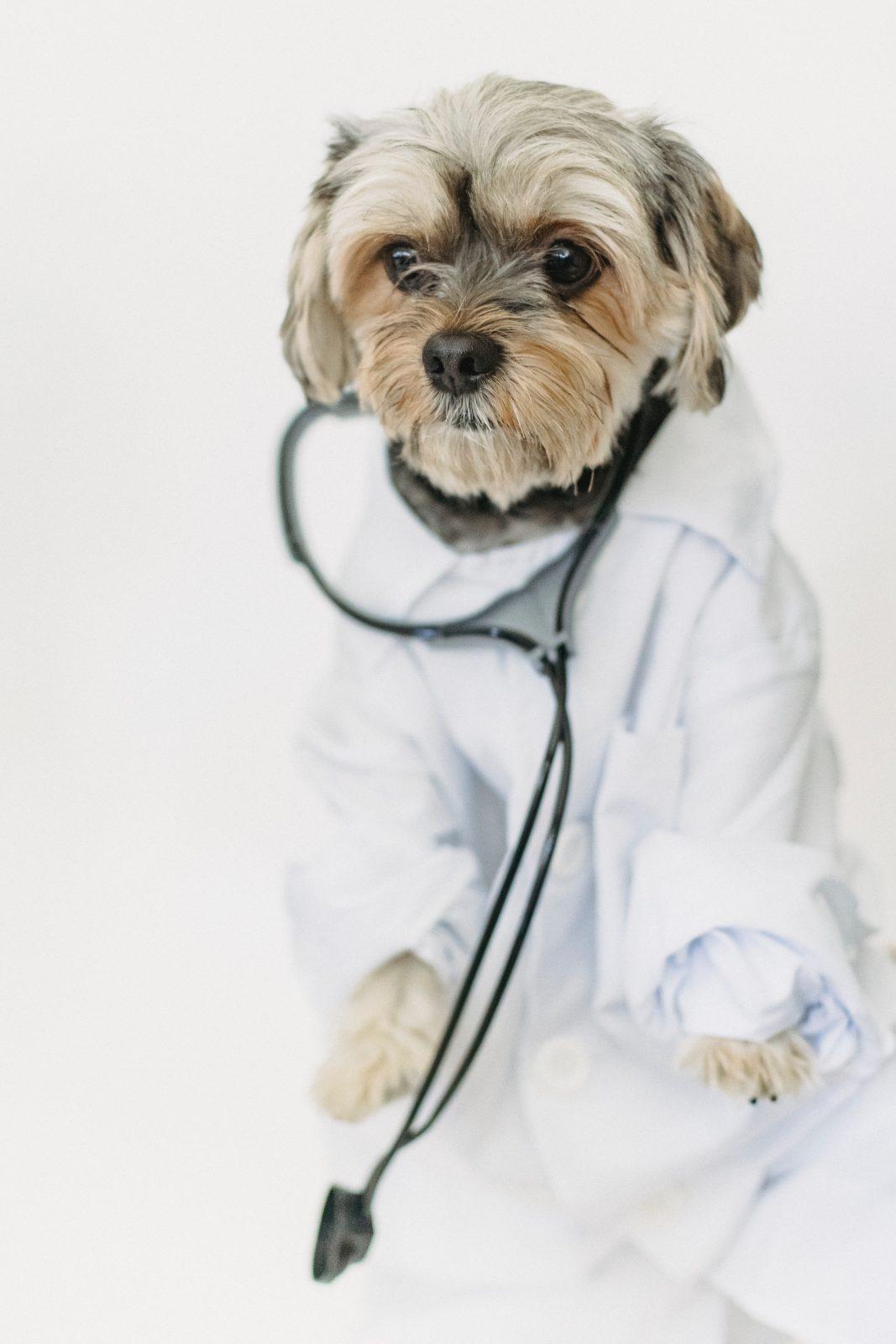 pexels sam lion 5732461 - Você já Ajudou a Vermifugar um Cão Carente Hoje?