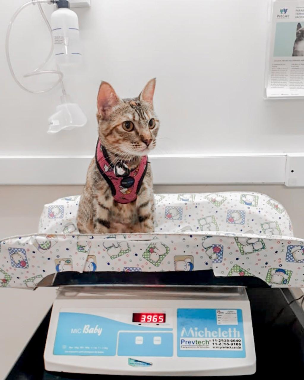 whatsapp image 2021 03 19 at 17 07 12 - Cuidados Com Medicamentos Para Cães e Gatos
