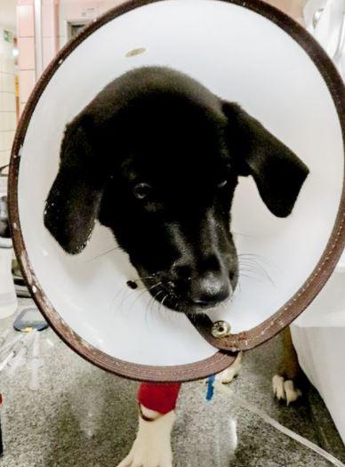 parvovirose filhote - Parvovirose canina mata!!!