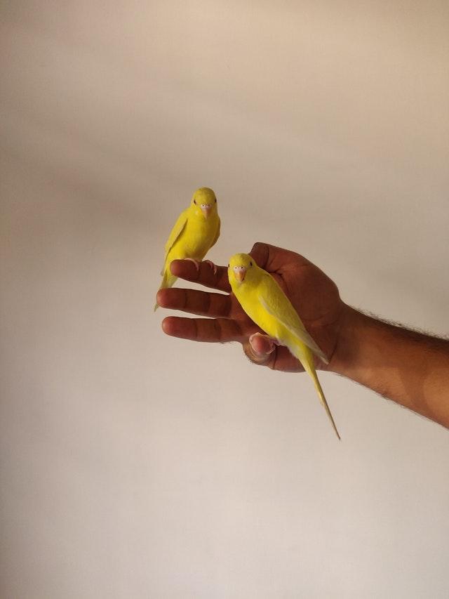 pexels abhishek tanwar 4430026 - Como Cortar as Penas das Asas de Aves...