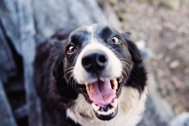 pexels kat jayne 551628 - Hidrocefalia em Cães: A Boa Notícia!!!