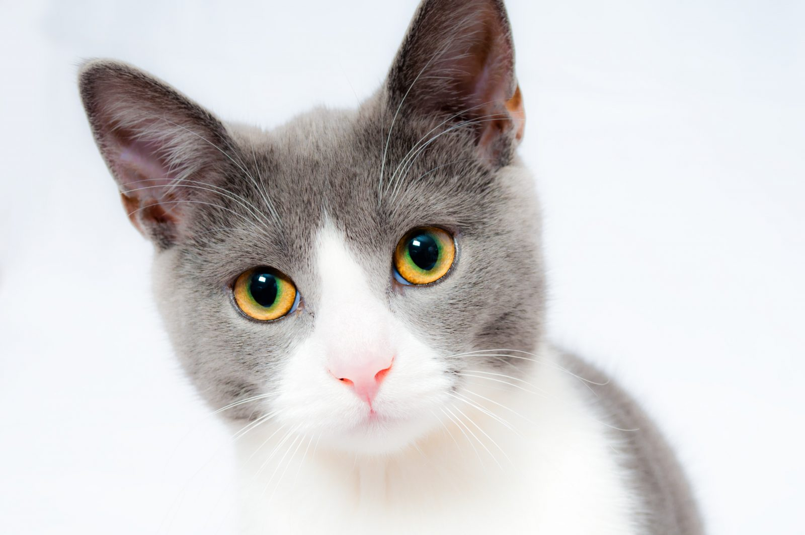 pexels pixabay 104827 - Tenho um Gato Soro Positivo...