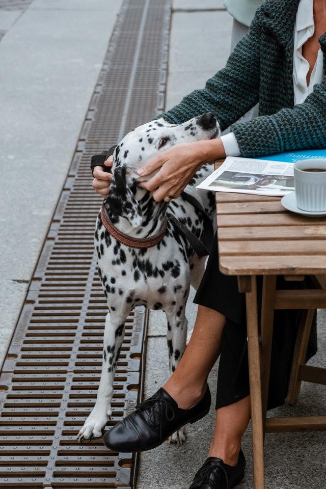 pexels cottonbro 4936209 - Pet Care é matéria da Folha de São Paulo e destaque no UOL