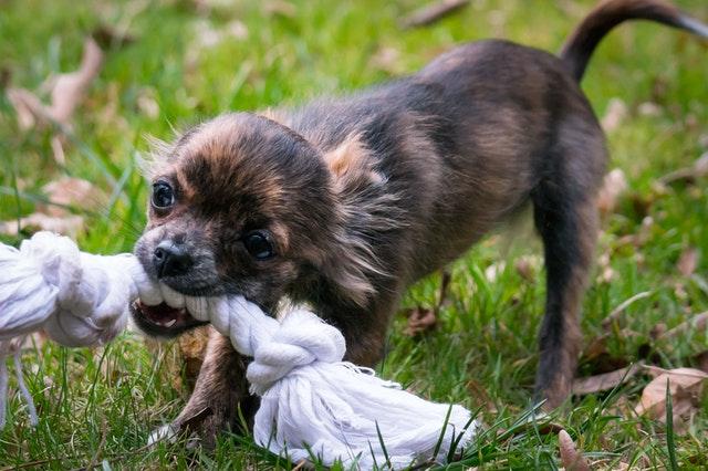 pexels pixabay 357142 - Mordidas Entre Cães e/ou Gatos: Surpresas Desagradáveis
