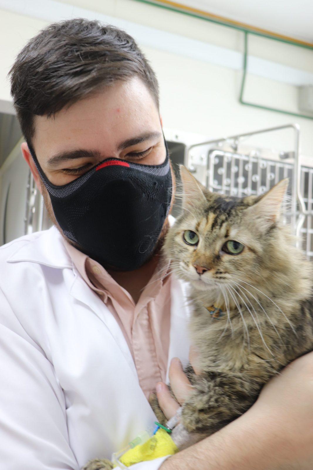 medicamento gato e1616621000670 - Aplicar Medicamentos e Soro na Veia: Quais os Riscos e Cuidados?