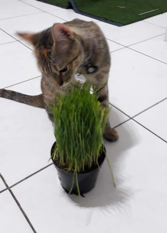 gato cachorro come grama - Dr., Meu Cachorro Come Grama!!! O que é Isso?