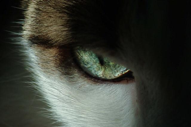pexels francesco ungaro 3324591 - Conjuntivite também afeta animais - R7
