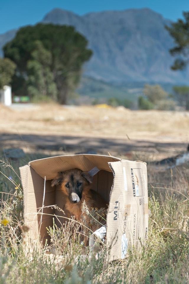 pexels kenneth 2836734 - Como Resgatar um Cão de Rua?