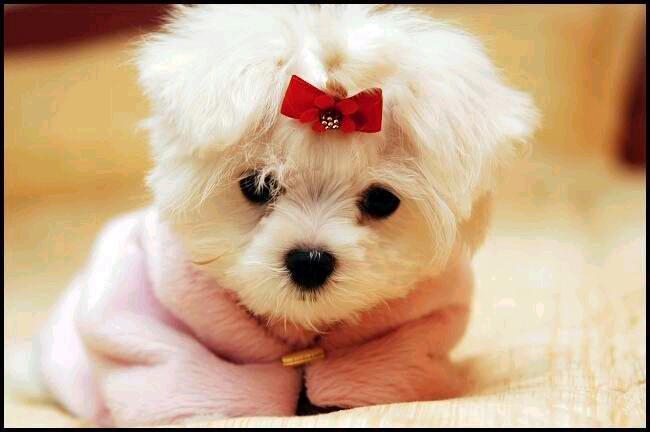 cachorra2 - Incontinência Urinária de Causa Hormonal em Cadelas Castradas