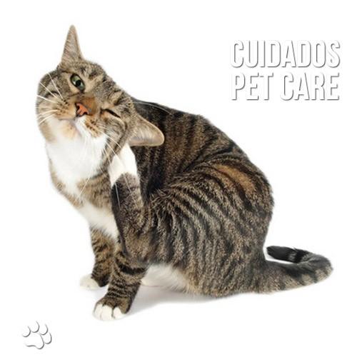 dez sinais de que o seu gato esta com pulgas - Dez sinais de que o seu gato está com pulgas