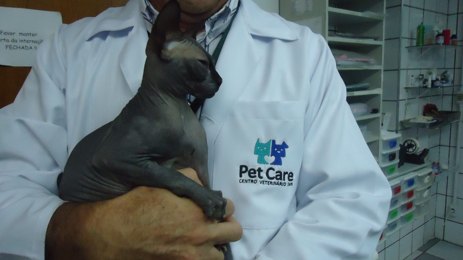 """dsc04051 - Hospital Veterinário """"Cat Friendly"""": Alguns Cuidados que Fazem Toda Diferença no Atendimento de Felinos"""