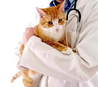 gato doente - Como Levar um Gato ao Veterinário?
