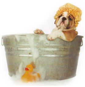 curso de banho e tosa - Verão: Calor, Pulgas e Piodermites. Vamos Tosar Essa Cachorrada?