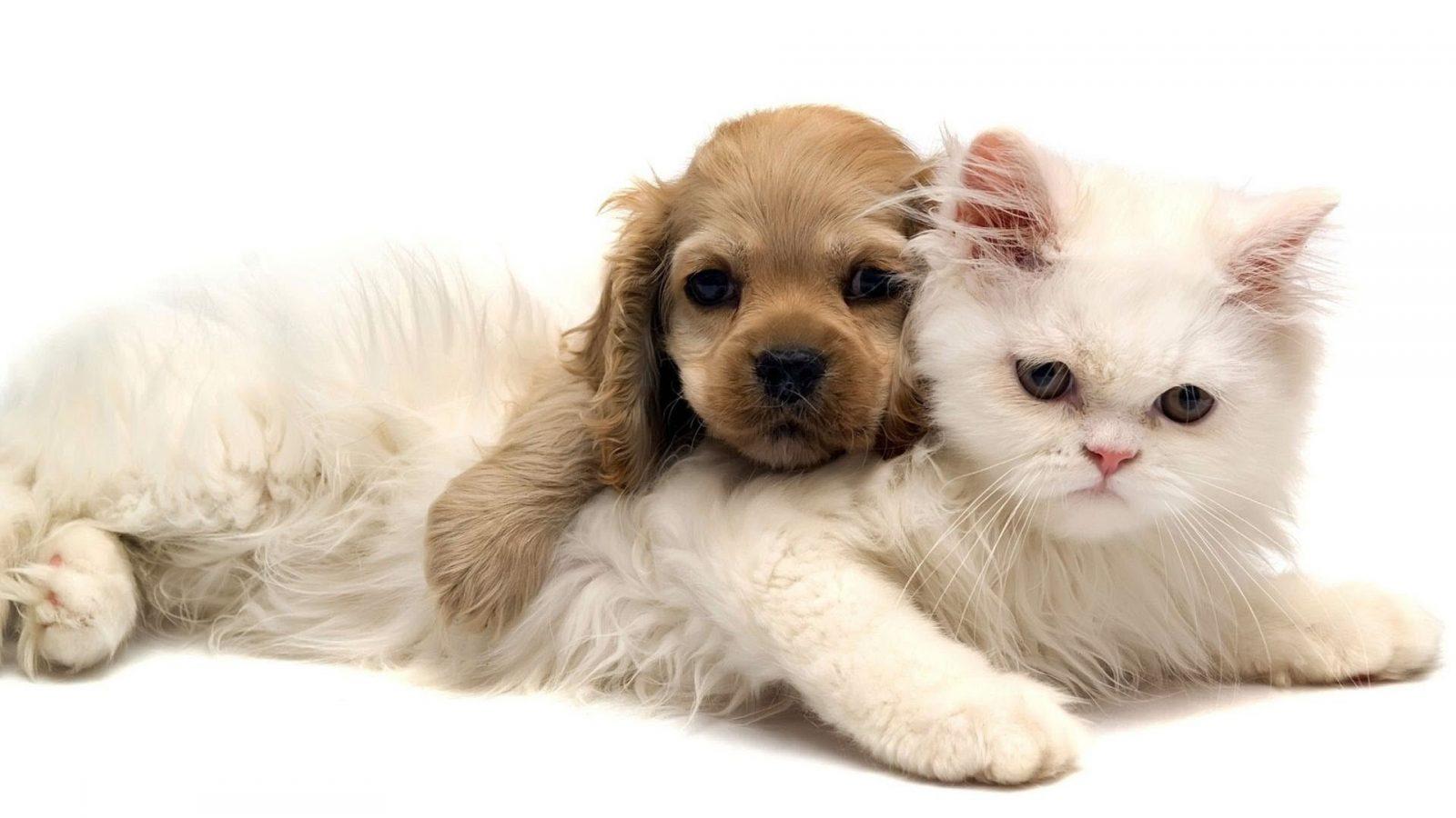 gato cachorro wallpaper - Gato ou Cachorro???