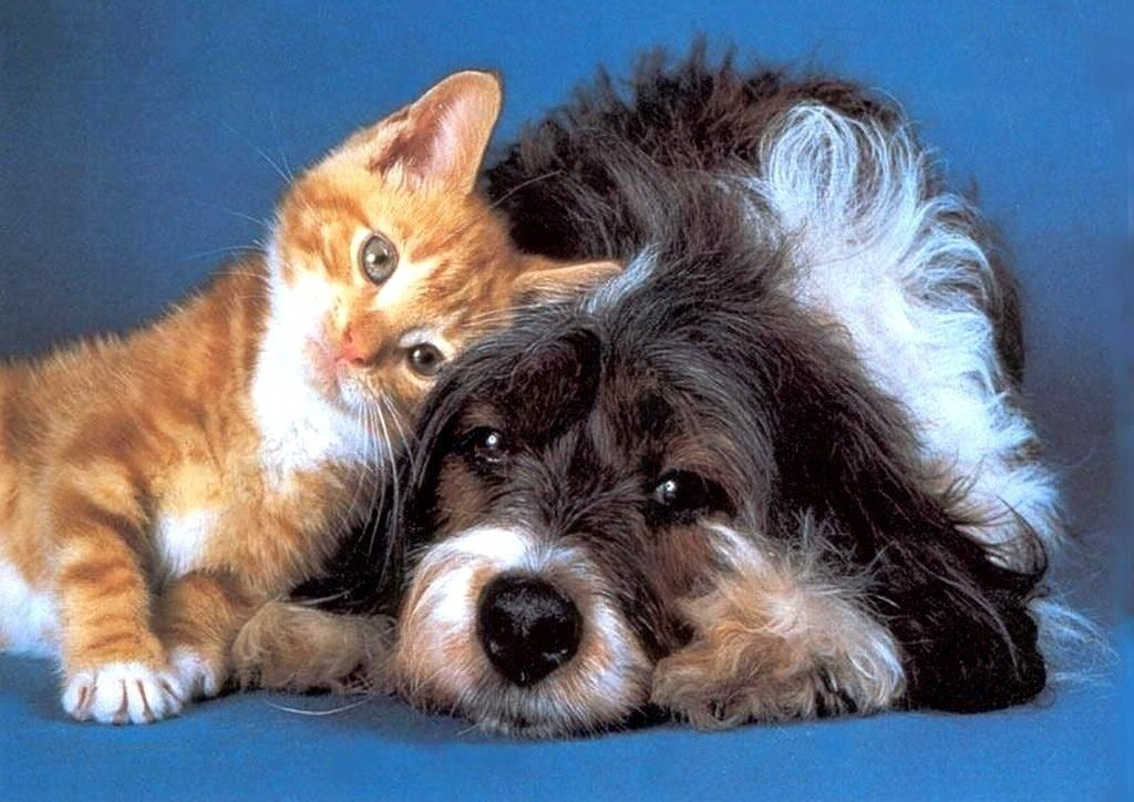 caes e gatos vao ganhar hospital em sao paulo imagem como caes e gatos - O QUE PODE CAUSAR A PANCREATITE EM CÃES E GATOS?