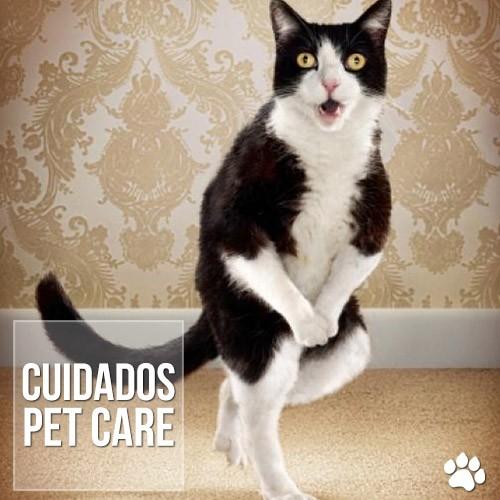 cuidados - Quando o gato começa a fazer xixi pela casa