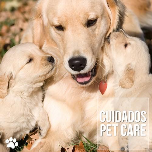 mastectomia em cadelas e gatas - Mastectomia em Cadelas e Gatas