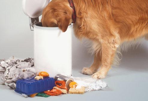 trash - O Perigo do seu Animal Revirar o Lixo