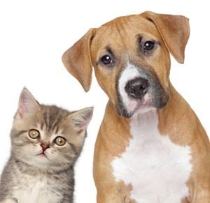 animais estimacao 02 17 10 12 - Campanha Snap