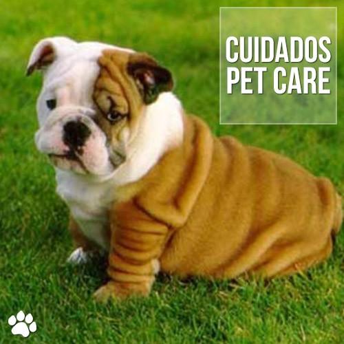 bulldog ingles doencas que acometem a raca - Bulldog Inglês: Doenças que acometem a raça