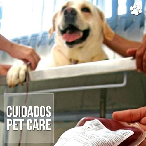 cuidados - Animais Também Precisam de Transfusão e Podem Doar Sangue