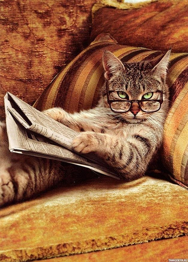 1 0ilkb0go - Características e Curiosidades sobre gatos: