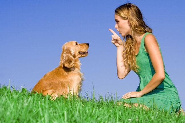 256716 139587 19 - Dica: como ensinar seu cão a fazer xixi com comando verbal?