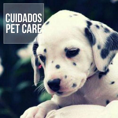 ascite liquido no abdomen de caes e gatos - Ascite: Líquido no abdômen de cães e gatos