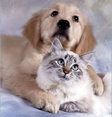 cao e gato - Efusão Pleural - Líquido livre na cavidade Torácica de Cães e Gatos