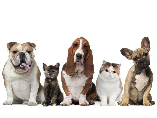 gato e cachorro - O que é a dirofilariose ou doença do verme do coração?