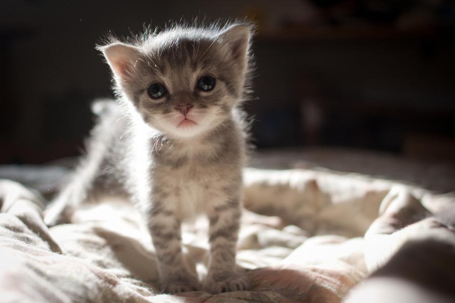 6 wif4 - Tenho ou vou ter um filhote de gato. Como sei se ele está saudável?