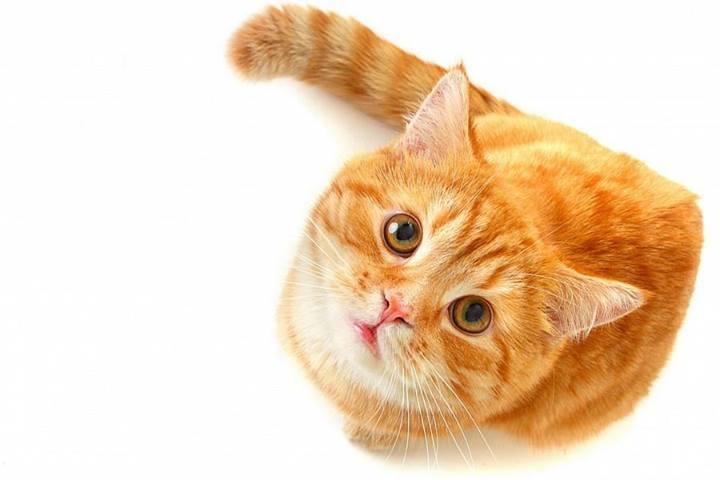 """73578 711176358897429 1973154009 n - Catnip """"uma erva que alucina os gatos"""""""
