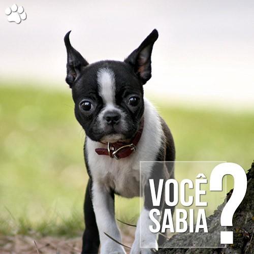 caes tambem sofrem com problemas de gases e flatulencia - Cães também sofrem com problemas de gases e flatulência
