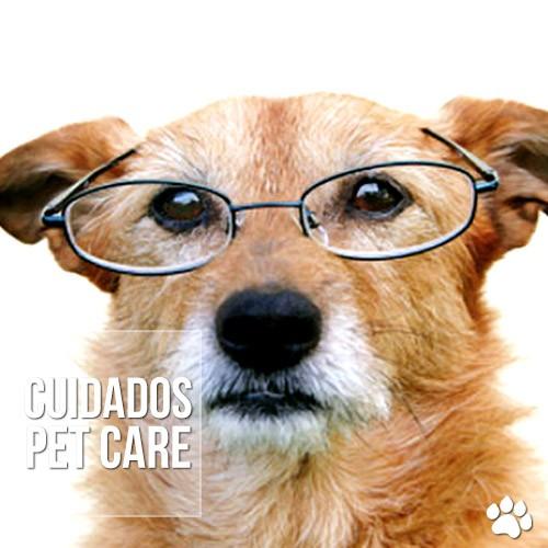 cuidados - Cuidando do animal idoso